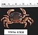 Asian Shore Crab - Photo   Daniel J. Drew, no known copyright restrictions (public domain)