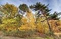 Herbstwald an der Hohen Schanze.jpg