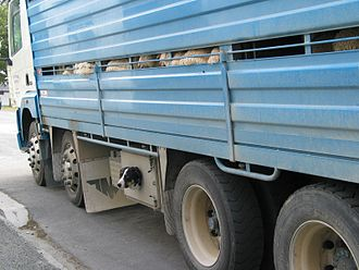 Herding dog - Sheepdog transported with livestock, Fairlie, New Zealand