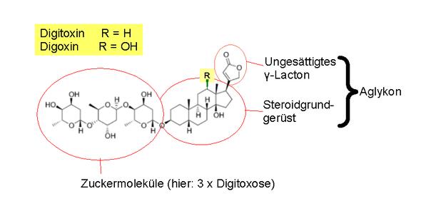 recettori nucleari per ormoni steroidei