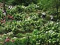 Higashimatsuyama Peony Garden 2.JPG