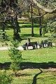 High Park, Toronto DSC 0238 (17393596395).jpg