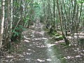 High Weald Paths in Snipes Wood - geograph.org.uk - 1409145.jpg