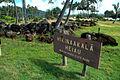 Hikinaakala Heiau, Wailua, Kauai, Hawaii, 2012.jpeg
