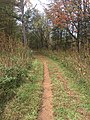 Hiking trail in Brumley Nature Preserve.jpg