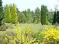Hillside in Bedgebury Pinetum - geograph.org.uk - 796954.jpg