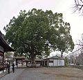 Hirano shrine , 平野神社 - panoramio (3).jpg