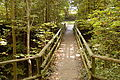 Holzbrücke bei Immenstaad (9498490944).jpg