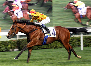 Akeed Mofeed British-bred Thoroughbred racehorse