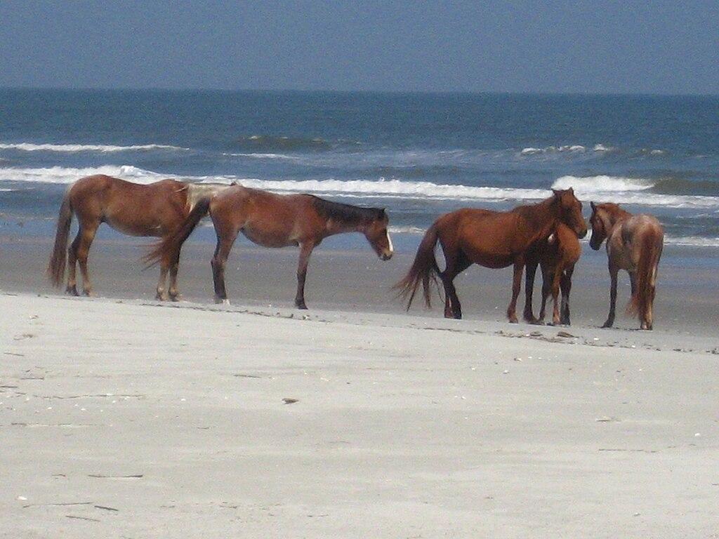 Horses on Island