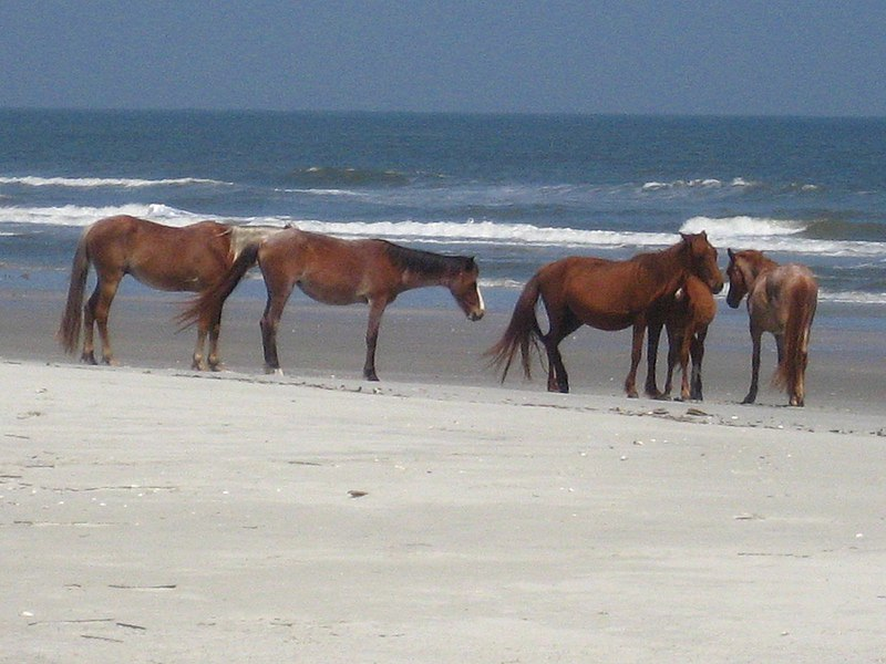 File:Horse herd at the beach.jpg