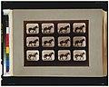Horses. Hauling LCCN2008680819.jpg