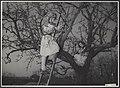 Huis te Lande tuinbouwschool te Rijswijk. Het snoeien van de oud appelboom met, Bestanddeelnr 035-0165.jpg