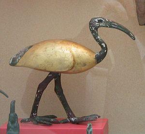 African sacred ibis - Copenhagen Museum