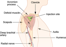 Deltoid site