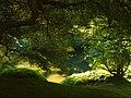 In Japanese garden, Portland (4333296058).jpg