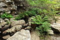 In the Rocks and Ferns (3401033979).jpg