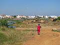 India - Chennai - Velichery - goat herding in Tansi Nagar (2276769066).jpg