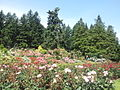 International Rose Test Garden, Oregon (2013) - 2.jpeg