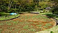Iris bed - Meiji Shrine - Tokyo, Japan - DSC05501.jpg