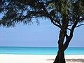 Island Oahu Hawaii.jpg