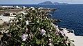 Isole egadi sicily boboviel favignana marettimo levanzo (32).jpg