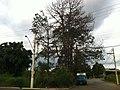 Itupeva - panoramio (695).jpg