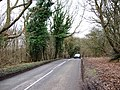Ivy-covered trees by the Road - geograph.org.uk - 1201940.jpg