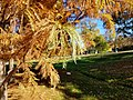 Jack Nicklaus Park (formerly Parkway Park) (31004473565).jpg