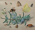 Jan van Kessel - Insects and a Sprig of Rosemary - 2018.41.1 - National Gallery of Art.jpg