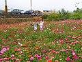 Jiuhu Flower Field 九湖花田 - panoramio (2).jpg
