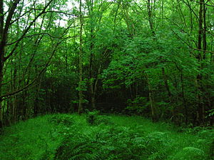 Galston, East Ayrshire - The Judge's Hill near Galston, just visible through the woods.
