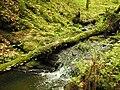 Kavinský potok (17).jpg