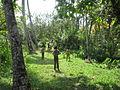 Kerala Backwaters Cricket.JPG