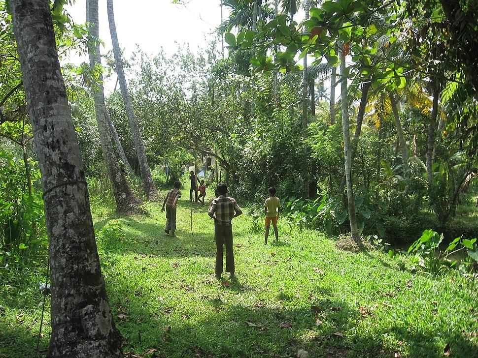 Kerala Backwaters Cricket