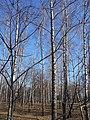 Khimselyshche, Cherkasy, Cherkas'ka oblast, Ukraine - panoramio (113).jpg