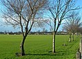 King George V Playing Fields - geograph.org.uk - 667803.jpg