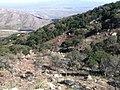 Kitt Peak National Observatory, AZ, 2011 Hazardous Fuels Reduction Project, Ironwood Hot Shots - panoramio.jpg