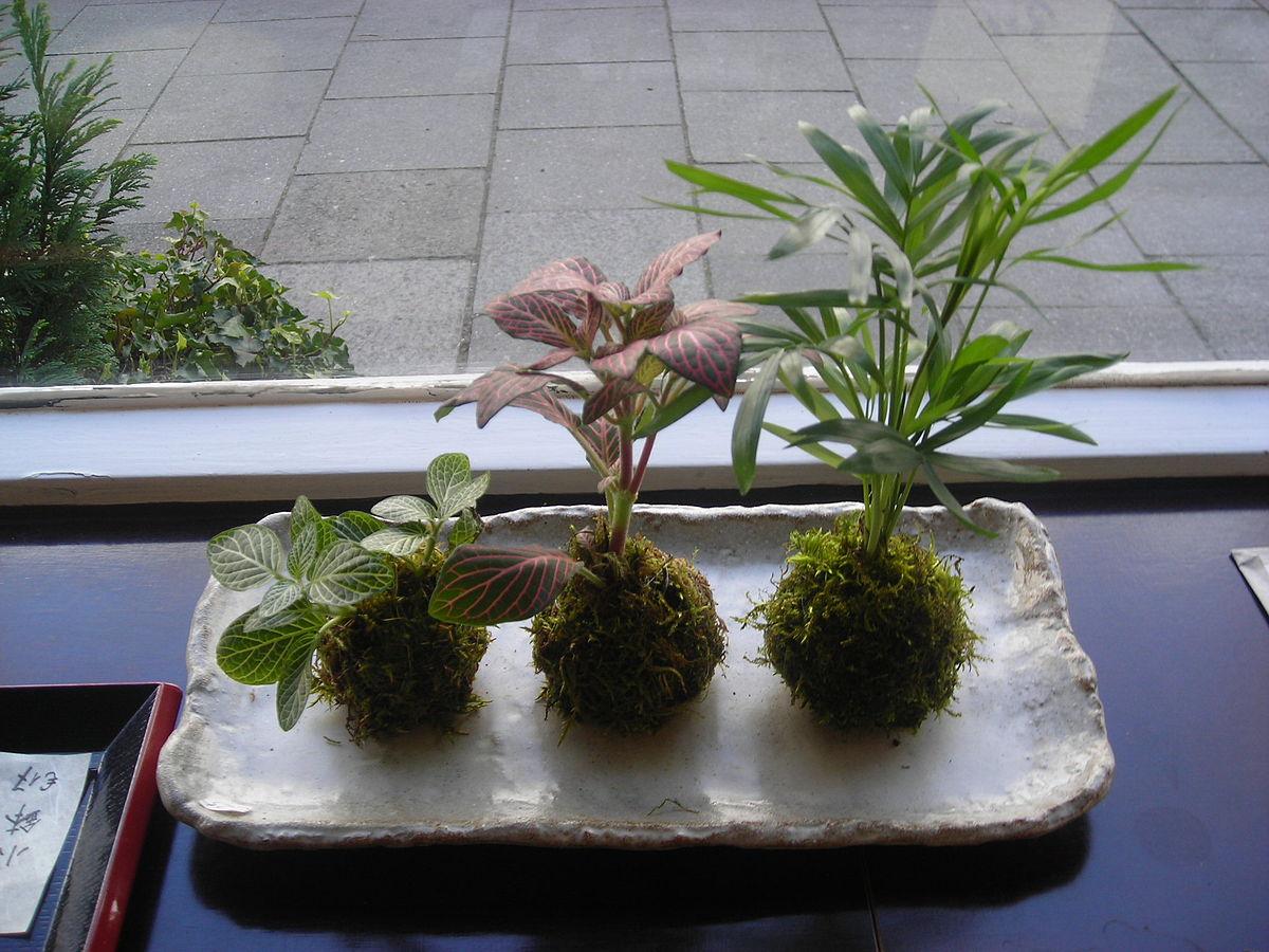Kokedama wikipedia la enciclopedia libre - Cultivo del bonsai ...