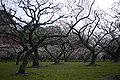 Korakuen Okayama38n4000.jpg