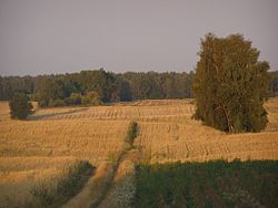 Krajobraz Łasi.JPG
