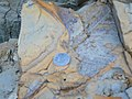 Kukkehalli fossil bentonite 8w.jpg