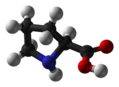 Ball and stick model of proline ((2S)-carboxylic acid)