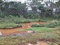 LAGUNITA LOMA PYTA - panoramio (1).jpg