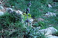 La gespa i una flor.JPG