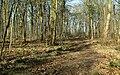 Lady Spencer's Walk - geograph.org.uk - 803641.jpg