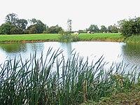 Lake at Newton Hall - geograph.org.uk - 232789.jpg
