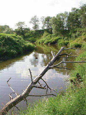Volokolamsky District - The Lama River near Yaropolets in Volokolamsky District