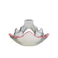 Lambdoid border of occipital bone09.png