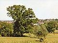 Large Oak Tree, Oakwood Park, London N14 - geograph.org.uk - 889618.jpg